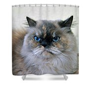 Himalayan Persian Cat Shower Curtain