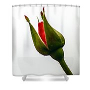 Hint Of A Rose Shower Curtain