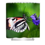 Hint Of Red Butterfly Shower Curtain