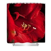 Hippeastrum Shower Curtain