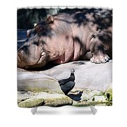 Hippo And Friend Shower Curtain
