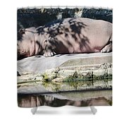 Hippo At Leisure Shower Curtain
