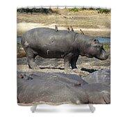 Hippo - Family Shower Curtain