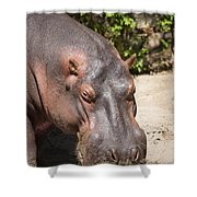 Hippo Hair 1 Shower Curtain