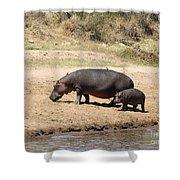 Hippo Mum And Calf Shower Curtain