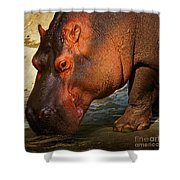 Hippo On The Waterfront Shower Curtain