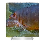 Hippo Taking A Plunge Shower Curtain