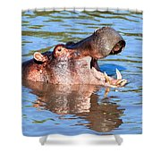 Hippo With Open Mouth In River. Serengeti. Tanzania Shower Curtain
