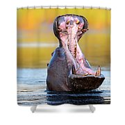 Hippopotamus Displaying Aggressive Behavior Shower Curtain