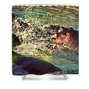 Hippopotamus Fight In River. Serengeti. Tanzania Shower Curtain