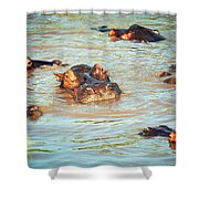 Hippopotamus Group In River. Serengeti. Tanzania Shower Curtain