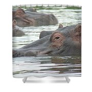 Hippopotamus In Kenya Shower Curtain