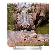 Hippopotamus In Water Shower Curtain