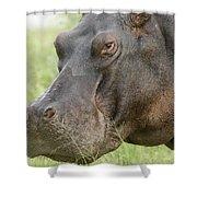 Hippopotamus Okavango Delta Botswana Shower Curtain