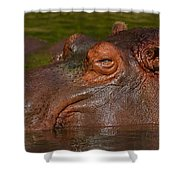Hippopotamus With Its Head Just Above Water Shower Curtain