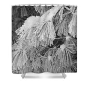 Hoar Frost On Pine Branches Shower Curtain