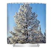 Hoar Frost Ponderos Pine Tree, Sundance Shower Curtain