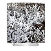 Hoarfrost 18  Shower Curtain
