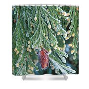 Hoarfrost On Pine Bough Yosemite National Park Shower Curtain