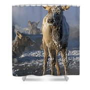 Hoarfrosted Elk Calf Shower Curtain
