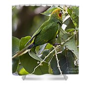 Hoffman's Conure Shower Curtain