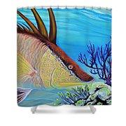 Hogfish Shower Curtain