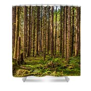 Hoh Rain Forest Shower Curtain