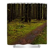 Hoh Rainforest Road Shower Curtain