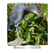 Hold-off 3d Glasses Shower Curtain
