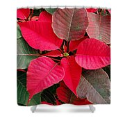 Holiday  Color Shower Curtain