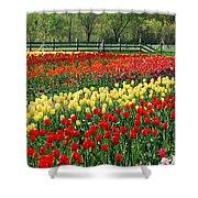 Holland Tulip Fields Shower Curtain
