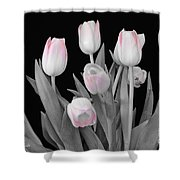 Holland Tulips In Black And White With Pink Shower Curtain