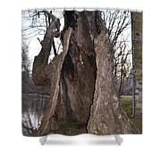 Hollow Tree At Mather Mill Shower Curtain