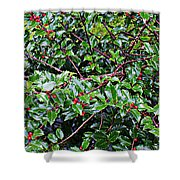 Holly Bush - Shower Curtain