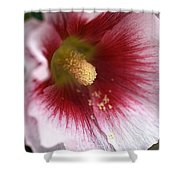 Hollyhock Flower Shower Curtain