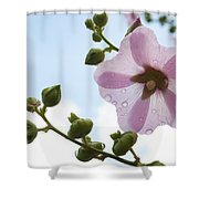 Hollyhock With Raindrops Shower Curtain