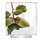 Holm Oak Branch With Acorns Shower Curtain