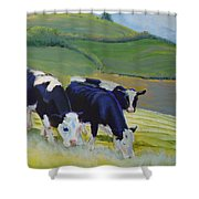 Holstein Friesian Cows Shower Curtain
