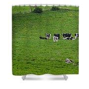 Holsteins Shower Curtain