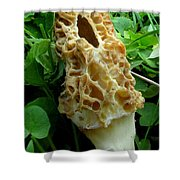 Holy Morel Shower Curtain