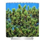 Holy See Shower Curtain