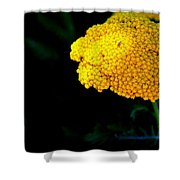 Home On The Range 16127  Shower Curtain