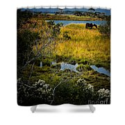 Home On The Range Shower Curtain