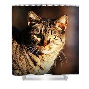 Homeless Cat Shower Curtain