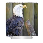 Homosassa Springs Bald Eagle Shower Curtain