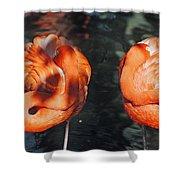 Homosassa Springs Flamingos 14 Shower Curtain