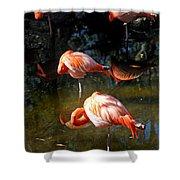 Homosassa Springs Flamingos 5 Shower Curtain