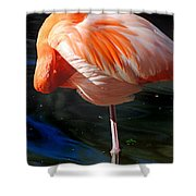 Homosassa Springs Flamingos 7 Shower Curtain