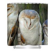 Homosassa Springs Snowy Owls 1 Shower Curtain