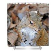 Homosassa Springs Squirrel 2 Shower Curtain